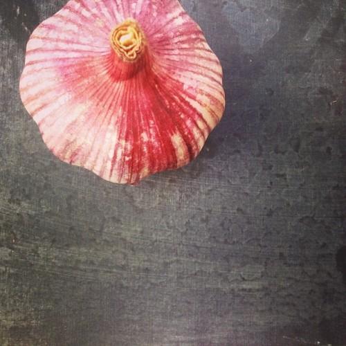 TIK - garlic